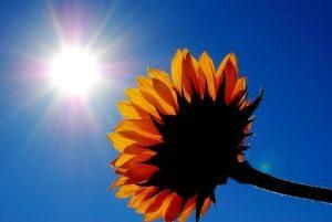 Sunshine and flower